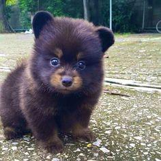 いいね!37千件、コメント387件 ― Daily Animal Postsさん(@animalzofig)のInstagramアカウント: 「Bear cub or puppy? Either way, I LOVE HIM! 」