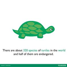 Did you know that there are about 320 species of turtles in the world and half of them are endangered?