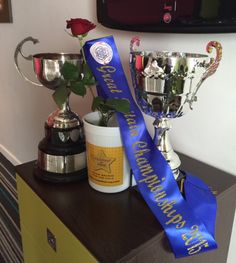 Feistan At Home - The choice of current and future champions! Order online for your next Feis, Oireachtas or Major Competition at http://feistan.com/feistan-at-home/