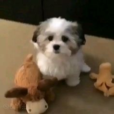 This little fella knows exactly who his best friend is Who's your best friend? Source by The post Who's your best friend? appeared first on Haney Havanese Dogs. Funny Animal Memes, Cute Funny Animals, Funny Animal Pictures, Cute Baby Animals, Funny Dogs, Animals And Pets, Cute Dogs And Puppies, Cutest Small Dogs, Small Puppies