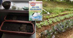 12 studených jídel připravených ze zeleniny: S Vašim tělem spraví zázraky a konečně shodíte ta přebytečná kila! - Plants, Compost, Plant, Planets