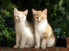 Twin Kittens --Cutest Twins Animal Photography