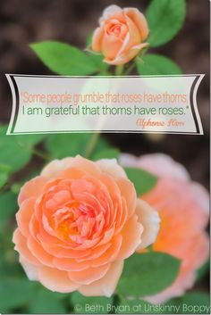 """""""Some People grumble that roses have thorns; I am grateful that thorns have roses."""" {LOVE David Austin Roses}"""