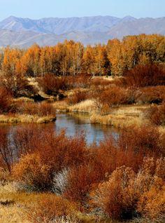 Silver Creek. Idaho.