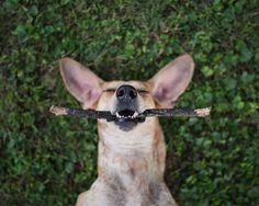Dogs are this wonderful reminder of our daily blessings. We so often forget that our good health is such a gift...and that we don't need fancy toys...the world is full of free sticks. by thiswildidea