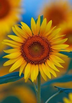 ~~in the sunflower field by Shiro~~