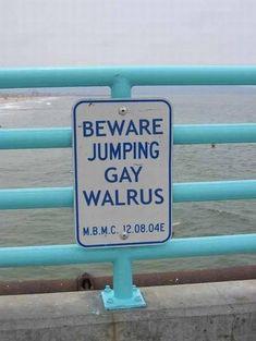 Pas op voor de springende homo walrus? I #Taalmissers en #vertaalblunders I TVcN Tolk- en vertaalcentrum Nederland