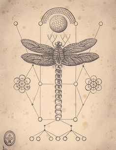 The Art of Daniel Martin Diaz / Mutation Machine / dragonfly / Sacred Geometry <3
