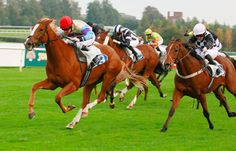 Helping You To Make Income From Horse Betting In The UK