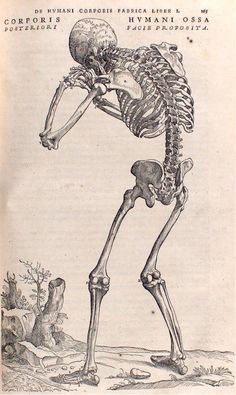 Picture library captures Royal Society's rich history Illustration from De Humani Corporis Fabrica by Andreas Vesalius, first published in 1543 Andreas Vesalius, Éphémères Vintage, Vintage Ephemera, Anatomy Drawing, Anatomy Art, Human Anatomy, Memento Mori, Illustrations Médicales, Medical Illustrations