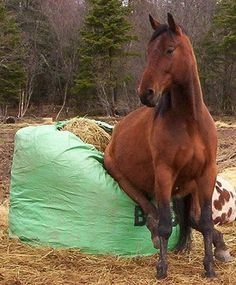 Caption this funny horse picture! All The Pretty Horses, Beautiful Horses, Animals Beautiful, Funny Horse Pictures, Funny Horses, Animal Pictures, Nature Pictures, Farm Animals, Funny Animals