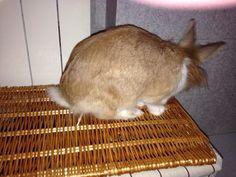 PISOLO stà curiosando sopra il cesto nuovo per biancheria da bagno ... Lei deve spadroneggiare.