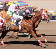 Here Kittykittykitty(2007) Genuine Strawfly- One Diamond Cat By Now I Know. 3x4x5 To Special Effort, 5x5 To Rocket Bar. Winning Mesilla Valley Speed H At Sunland Park On March 9, 2014.