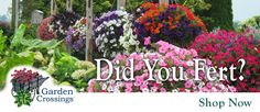 Do your planters look yellow? Are they blooming just at the tips? Do they look tired and weak? It is time to fertilize your hanging baskets and containers!