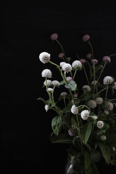 I love simple floral arrangements usually with only a few selections of buds and flowers together. These pictures of flowers against dark ba. My Flower, Wild Flowers, Beautiful Flowers, Cut Flowers, Deco Floral, Arte Floral, Ikebana, Bouquet, Colorful Roses