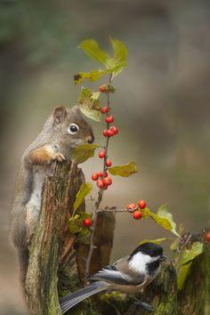 Squirrel and Chickadee Nature Animals, Animals And Pets, Wild Animals, Beautiful Birds, Animals Beautiful, Beautiful Pictures, Cute Baby Animals, Funny Animals, Amazing Animals