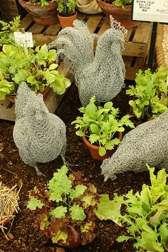 Chicken wire chickens