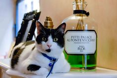 Tequila the cat Rose Trees, Love Words, Tequila, Vodka Bottle, Rome, Aqua, Drinks, Cats, Words Of Love