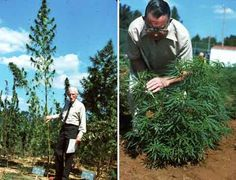 """Hemp: A New Crop with New Uses for North America  A great paper with tons of botanical information, history, and usage applications (even though it isn't a """"new"""" crop)."""
