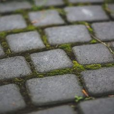 How to remove moss on your roof other weed growth between paving stones how to clean patio brick pavers in 5 moss from concrete and Flagstone Walkway, Cement Patio, Brick Pavers, Concrete, Patio Stone, Organic Gardening, Gardening Tips, Gardening Courses, Gardening Books