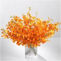Orange orchids <3