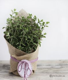 Home grown (or bought from a nursery)  herbs wrapped in burlap.  This is a cute gift idea for someone moving into a new home, a neighbor, friend or a little thank you gift.You could even attach a recipe or two that they could use their new herbs in!