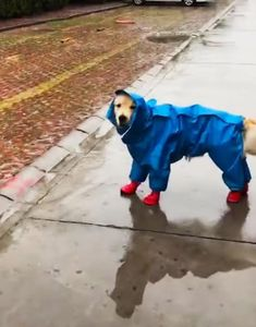 Funny Animals Of The Day - Funoramic Cute Animal Memes, Funny Animal Pictures, Funny Animals, Cute Animals, Dog Raincoat, Cat Carrier, Pets, Day, March