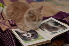 Cats love books too! Crazy Cat Lady, Crazy Cats, I Love Cats, Cute Cats, Funny Cats, Funny Emails, Cat Reading, Reading Books, Photos