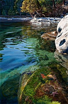 Intertidal Realm, water color by Carol Evans  - Complete List of Prints