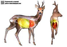 Олень. анатомическая мишень. Deer. anatomical target. Deer Targets, Hunting Guide, Shooting Targets, Bowhunting, Deer Hunting, Free Printable, Weapons, Fishing, Survival
