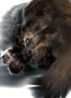 'cat'scan