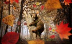 Image result for fall wallpaper Wallpaper Magic, Tier Wallpaper, Owl Wallpaper, Forest Wallpaper, Animal Wallpaper, Wallpaper Backgrounds, Laptop Wallpaper, Mobile Wallpaper, Phone Wallpapers