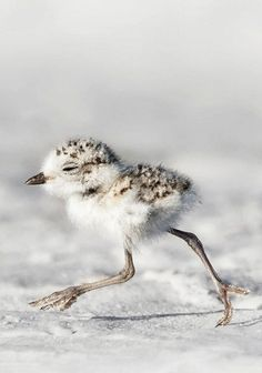 HOW CUTE…..HOW FUNNY……GET THOSE LITTLE LEGS & TALONS A-MOVING THERE HONEY - YOU DON'T WANT TO MISS OUT WHAT YOUR MOMMA HAS FOR YOU AS A SURPRISE………….ccp