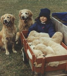 A girl and her Goldens.