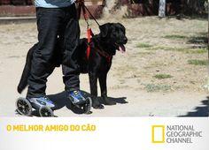 César Millán usa seu conhecimento para que cachorros e humanos encontrem seu amigo ideal, em O Melhor Amigo do Cao, no Nat Geo. #NatGeo Confira conteúdo exclusivo no www.foxplay.com