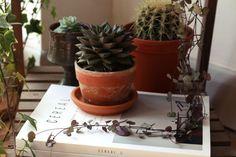 How-to-display-indoor-plants-3