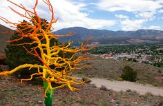 Turning dead trees into beautiful art. - - - -Dead Trees Come Alive In Colorado