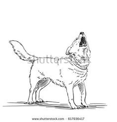 Sketch of a howling dog, Hand drawn illustration, Line art