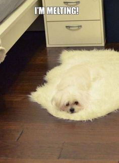 Melted dog