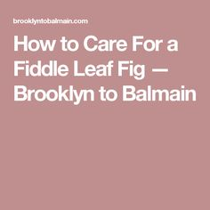 How to Care For a Fiddle Leaf Fig — Brooklyn to Balmain