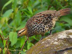 Fakim Wildlife Sanctuary - in Nagaland, India.