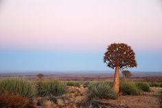 Etosha National Park, Namibia. Afri-Unique Tours