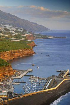 95 Ideas De Mi Palma Hermosa Palmas Isla De La Palma Islas