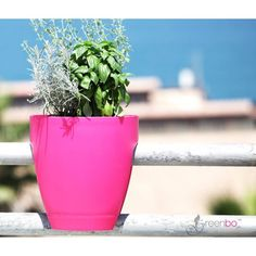 fioriera greenbo pink