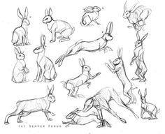 I have to draw holidays banners as a part of my internship so today I was browsing deviantart stock and sketching to learn how a rabbit works so I will be able to invent my own rabbit pose As refer...