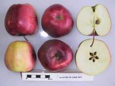 Italian Tree Fruit Production | Hort 499C