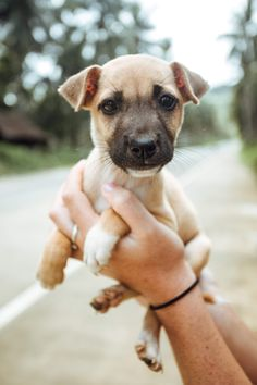 This little guy pulled at the heart strings. Philippines Travel, Cute Funny Animals, Snorkeling, Adventure Travel, Labrador Retriever, Pitbulls, Pup, Travel Destinations, Waterfall