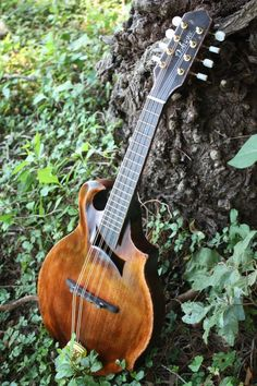 Englemann Spruce Handcrafted by DubovaHandmade Banjo, Ukulele, Example Of News, Old Cameras, Beautiful Guitars, Musical Instruments, This Or That Questions, Cigar Boxes, Mistress