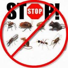 رياض النظافه 0551047973 اتصل الان للتخلص نهائياً من كافه الحشرات المنزليه المزعجه نخلصك تماما من مشاكل الحشرات و الفشران و القوارض و الأرضه و النمل الابيض #مكافحة_حشرات #مكافحة_النمل_الابيض #رش_مبيدات #الرياض اتصل الان