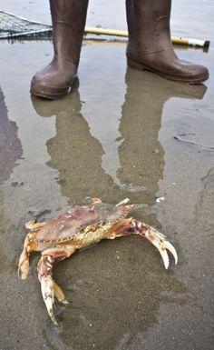 Some crabbing tips from some of our locals